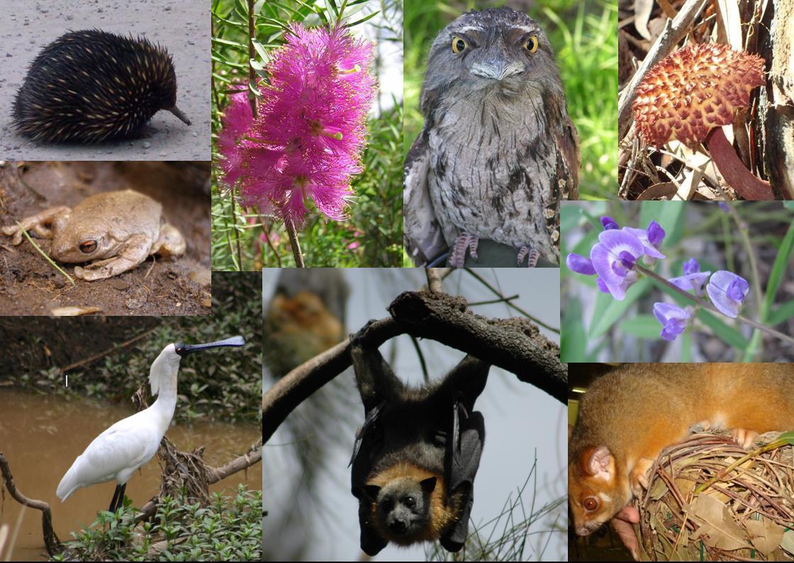 Biodiversitypicture