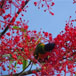Flame-Tree-Feast.jpg gallery thumbnail