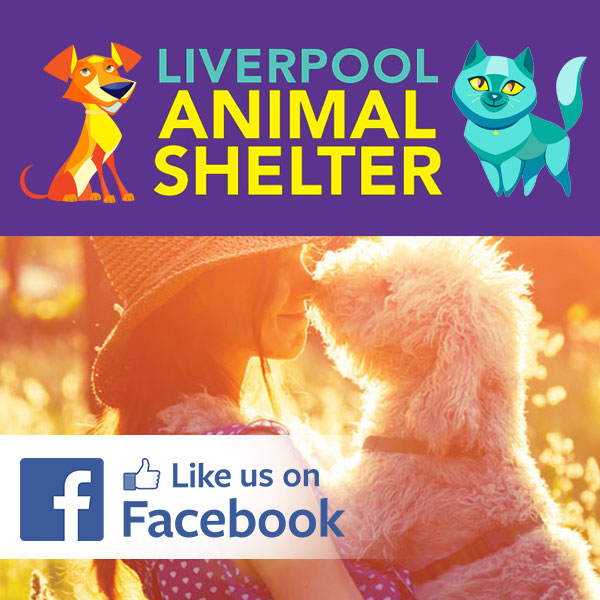 Animal Shelter Follow